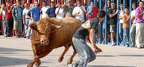 Antitaurinos amenazan de muerte a alcaldes que mantengan el 'bous al carrer'