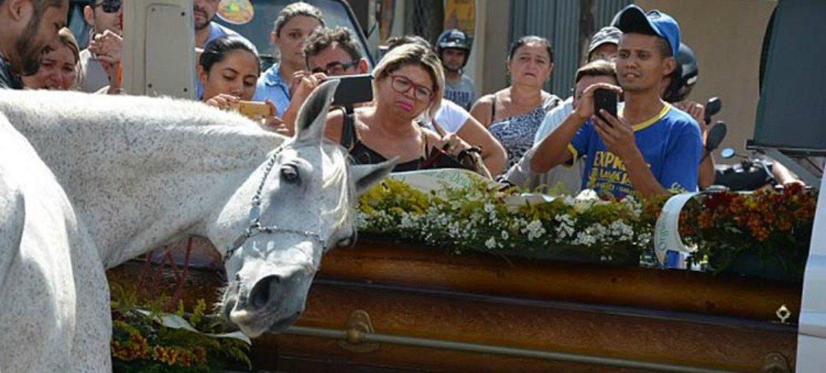 Vídeo viral: Sereno, el caballo que lloró sobre el ataúd de su dueño