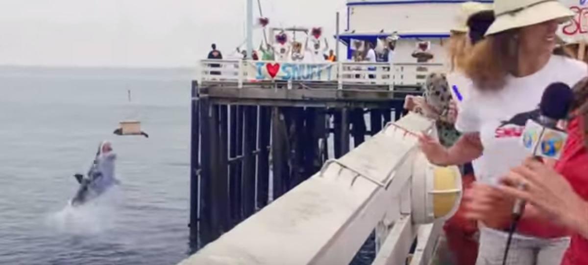 ¿Se comió el tiburón a la foca? El vídeo que dejó en shock a miles de personas
