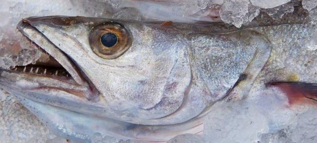 """""""Satisfacción moderada"""" entre los pescadores de Cádiz por la cuota a la merluza"""