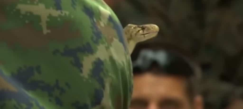 Los marines de EEUU en Tailandia matan y beben sangre de cobra