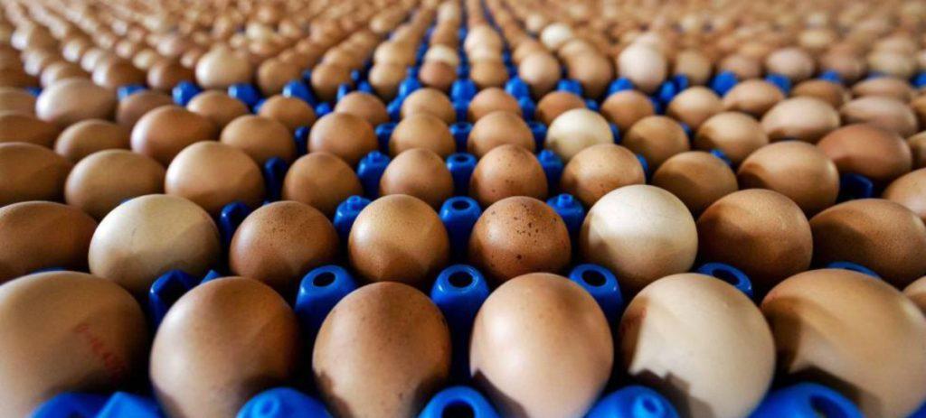 ¿De dónde vienen los huevos?