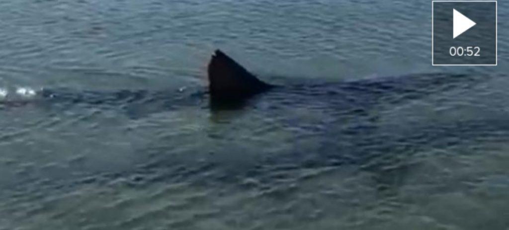 Avistan un tiburón en Fuengirola y cierran la playa