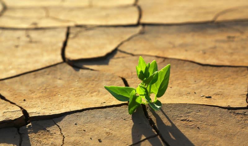 MAPFRE la única aseguradora española que evaluará el impacto del cambio climático junto a la ONU